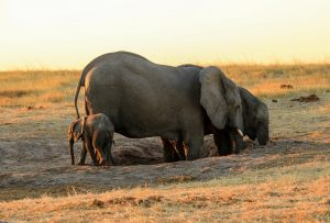 Elephant Hwange Nehimba seeps Imvelo