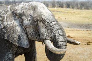 Elephant hwange nehimba seeps