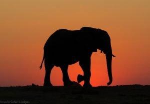 elephant sunset silhouette nehimba hwange