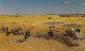 Elephants at the Nehimba seeps near Nehimba Lodge