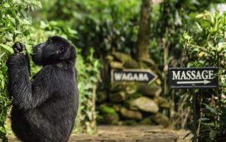 Gorillas at Lodge Bwindi Lodge