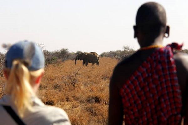 Kenya Walking Safari with Karisia watching elephant