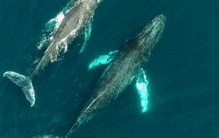Baja Whales Sea of Cortez Todos Santos Eco Adventures