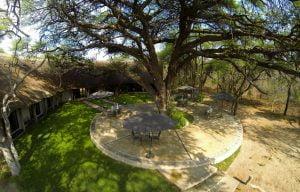 Camelthorn Lodge's namesake ancient camelthorn tree