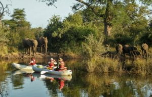 Canoeing with elephants drinking on the Zambezi River