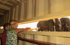 The Look-blind is great for kids to safely view elephants up-close