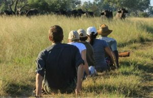 Walking safaris buffalo Hwange