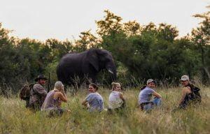 Walking safaris elephants up close Hwange