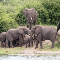 Classic Africa Safaris elephant family Kazinga Channel Gretchen Healey