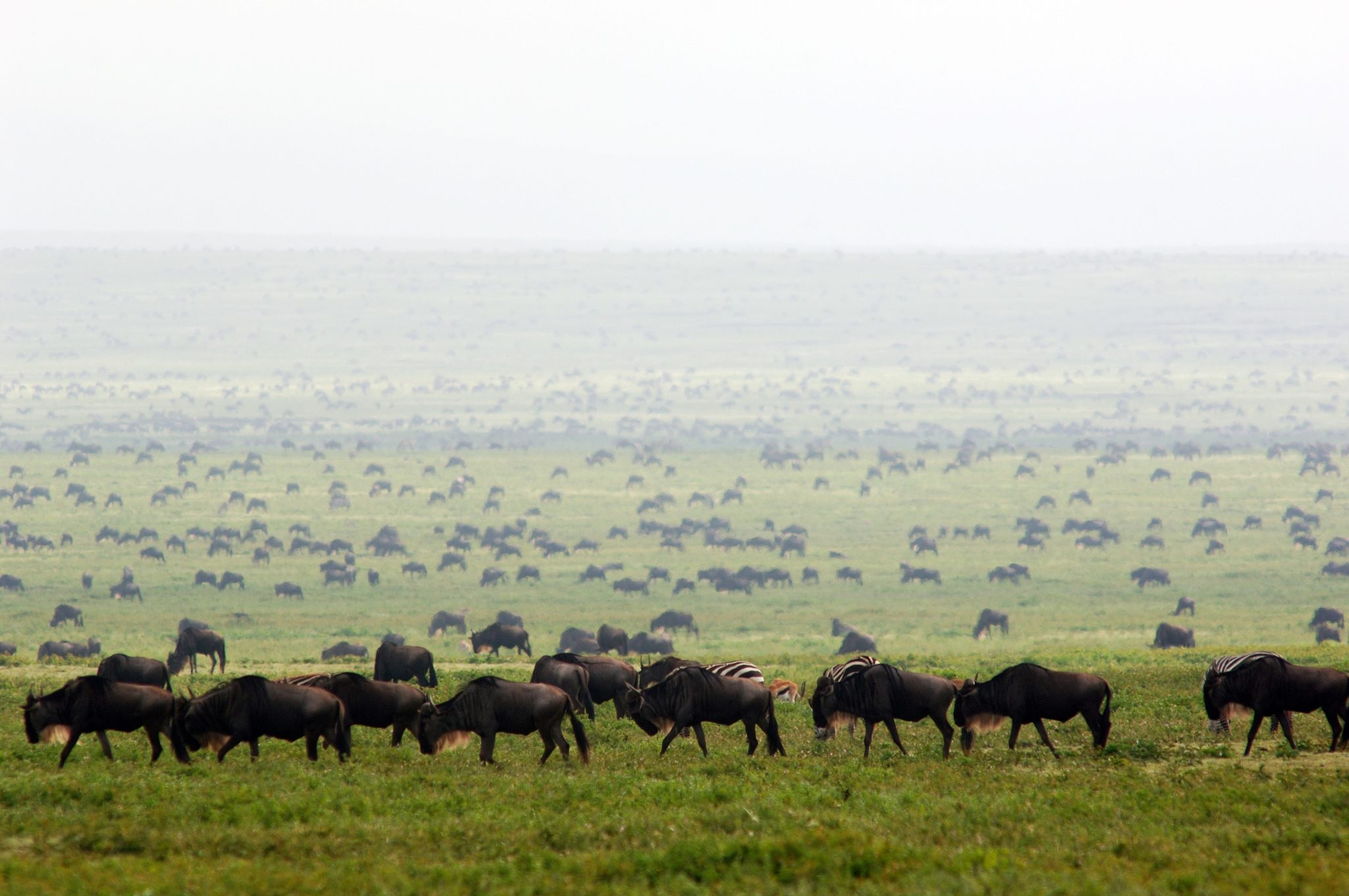 Wildebeest migration with Albatros East Africa