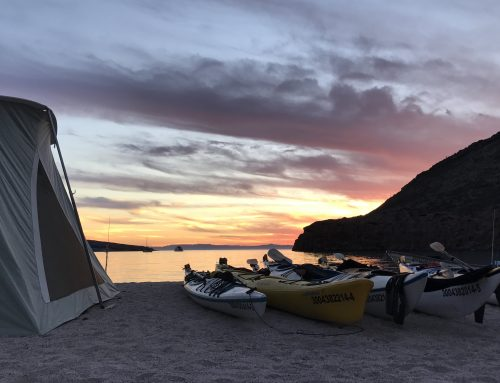 Trip Experience: Kayak Glamping with TOSEA on Isla Espiritu Santo, Baja California Sur