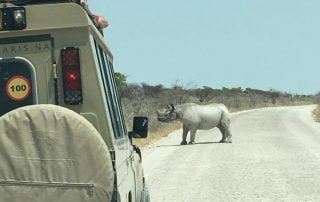 Ultimate Safaris_rhino in Etosha National Park