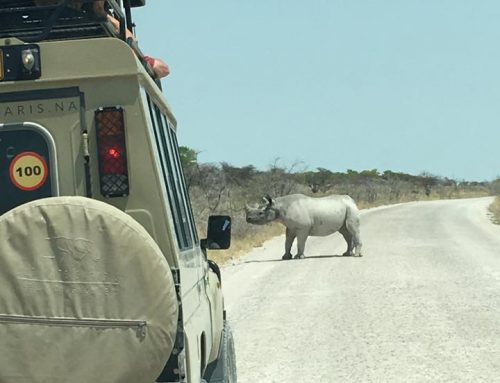2019 Ultimate Namibia Safari