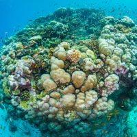 Manta Resort Reefball