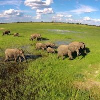 Elephants on Ngamo Plain in the green season with Imvelo Safari Lodges