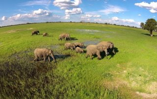 Elephants on Ngamo Plain in the green season with Imvelo Safari Lodges