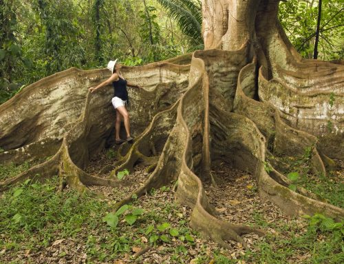 Special Experiences with Costa Rica Sun Tours
