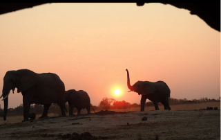 The opportunities for photographing elephants at Jozibanini Camp are very rewarding