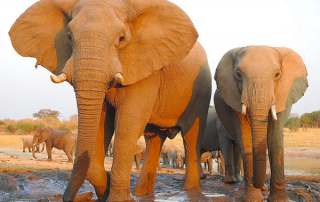 Elephants at the Jozibanini waterhole