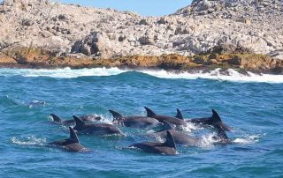 Dolphins in the Eastern Cape