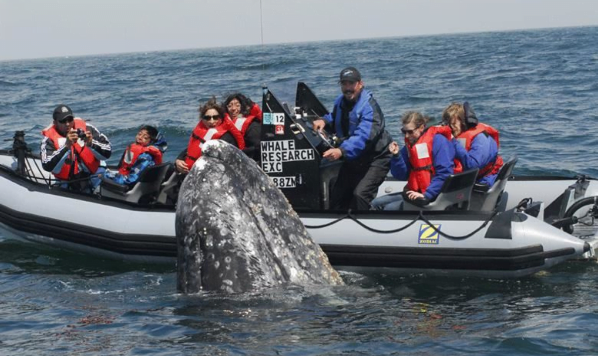 whale-watching-depoe-bay-oregon-first-nature-featured-image